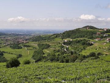 Valpolicella: percorso panoramico tra vino, anima e storia