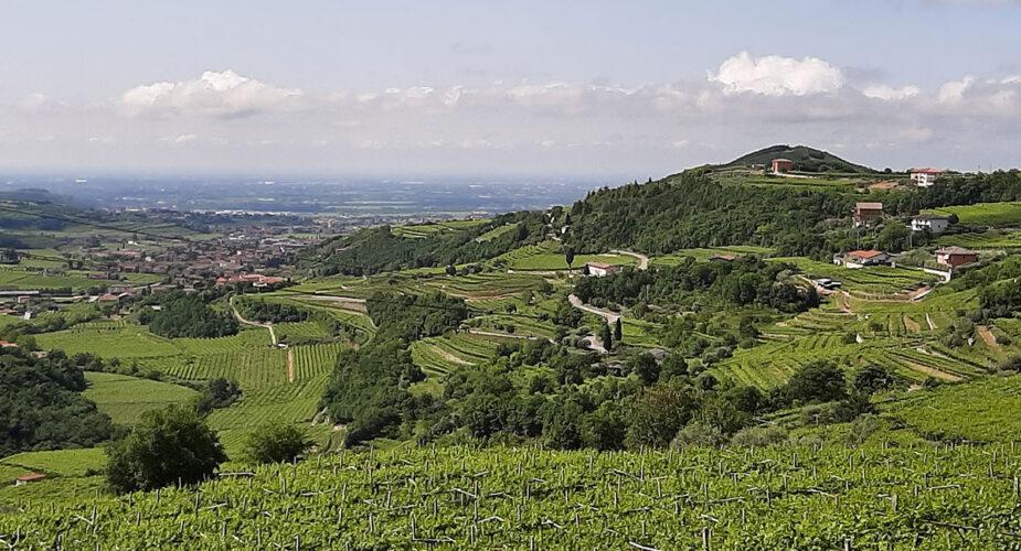 Valpolicella: Wine, Soul and History